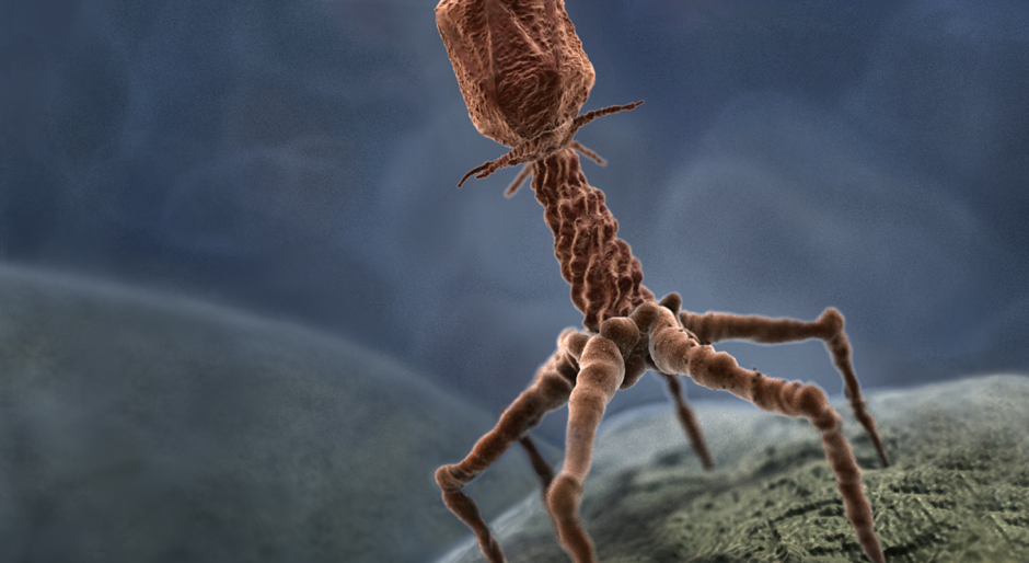 Figure 1. A bacteriophage infecting a host with its genetic information.