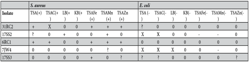 Table 1. Inhibition of E. coli and S. aureus by isolates.  + indicates inhibition of Gram-positive, - indicates inhibition of Gram-negative, a blank space indicates there was no inhibition, ? indicates the results were not conclusive, and X indicates the isolate did not grow.