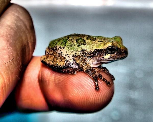 frog1-e1332820372678.jpeg