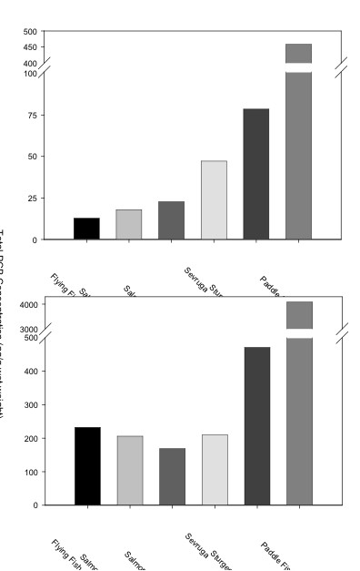 Figure 2. Total PCB concentrations for each roe sample are shown on a ng/g wet weight basis (top) and on a lipid normalized basis (bottom). Under both the wet weight and lipid normalize basis, American paddle fish roe contained the highest levels of PCBs.