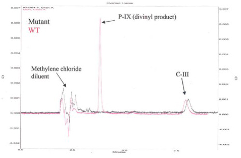 Figure 2. HPLC Chromatogram for Activity of Human Recombinant 6x-His-Tag Copro'gen Oxidase and Representative Mutant Copro'gen Oxidase Enzyme.