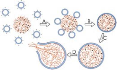Figure 1. Nanoparticles releasing the contained drug at the exact site of tumor.