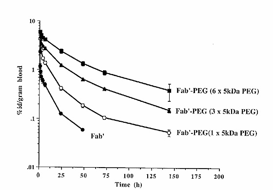 Title: Comparison of Penetrance through Blood Levels Caption: Graph showing the increased penetrance (higher tumor/blood ratio) of antibody fragments (diabodies and minibodies) and specifically the effectiveness of multivalent fragments to infiltrate tumors in comparison to single chain fragments and whole immunoglobulins. Reference: Holliger et al. 2005