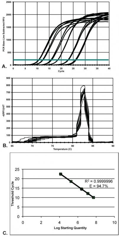 Figure 4. qPCR amplification data, melt curve analysis and constructed standard curve for little skate ACTB. A. The tight grouping of the triplicate amplification lines of each of the ACTB standards shows the precision of the reactions; B. A single peak in the melt curve analysis demonstrates that one specific product was amplified; C. The standard curve generated has an efficiency value of 94.7% indicating a robust and reproducible assay for use in future research.