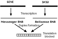 Figure 5. Antisense RNA Mechanism.