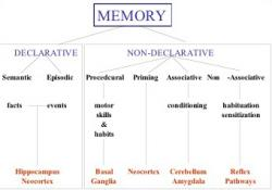 Figure 2. The various forms of memory. Image Courtesy: J.P. Card of University of Pittsburgh.