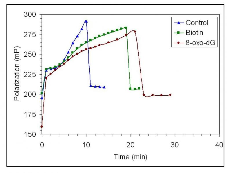 Figure 3. Competitive binding assay. DNA alone (triangles), DNA + 2 uM biotin (squares), DNA + 3 uM 8-oxo-dG (circles). Data were collected at 23C, in the presence of buffer (10 mM sodium phosphate, pH 7.4, 0.1 M NaCl ). The concentration of damaged, native DNA and avidin-FITC were approximately 2 pM and 5 nM, respectively. The data shown and TmaxP values represent one trial out of three independent trials. TmaxP values: DNA alone = 10 min; DNA + biotin = 19 min, and DNA + 8-oxo-dG = 21 min. Average TmaxP values: DNA alone = 10 + 1 min, DNA + biotin = 20 + 3 min, DNA + 8-oxo-dG = 20 + 2 min.