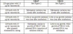 Table 1. Growth of NB107 and NB122 in different concentrations of vancomycin.