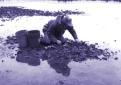 Figure 2. Harvesting Oysters.