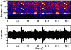 A spectrogram (like those studied by Mellinger and his team) of a northeast blue whale call.