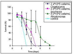 Figure 2. Survival rates for Bestiolina similis in response to optimal phytoplankton concentrations (figure 1) for Chaetoceros, Isochrysis, and Rhodomonas. Vertical Bars represent standard deviation. Rhodomanas is shown to be a superior feed for achieving high survival rates in comparison to optimal concentrations of Chaetoceros and Isochrysis