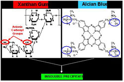 Figure 2. Molecular structures of anionic xanthan gum and cationic alcian blue.