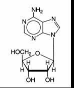 Structure of Adenosine
