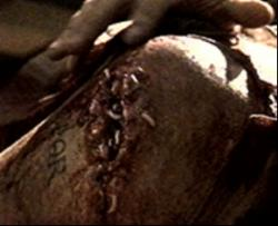 """""""leave them, they will clean it, wait and see"""", maggots cleaning Maximus' wound in the film Gladiator'"""