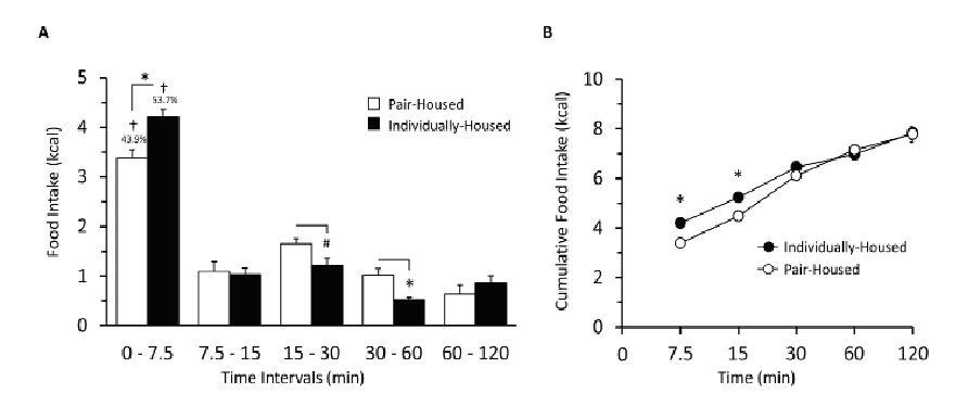 Figure 2. Social isolation caused a brief period of hyperphagia during early minutes of the binge-eating test.  A) Absolute high-fat food intake within indicated time intervals during the 2-hour binge-eating test. B) Cumulative high-fat food intake during the 2-hour binge-eating test. Values are means ± SE;  n  = 6 Pair-Housed (PH);  n  = 9 Individually-Housed (IH); 2 – Way RM-ANOVA w/ Bonferroni posttest * p  < 0.05, # p  < 0.10 compared with PH group; † p  < 0.05 compared with other time points. Percentages above bars refer to kilocalories consumed in the 7.5 minute bin relative to 2h intake.