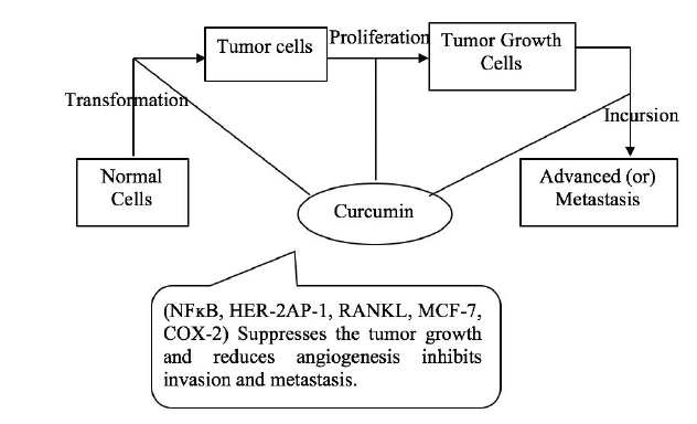 Figure 1. Circumin anti-cancer characteristics.