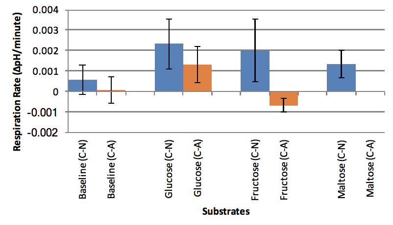 Figure 7. Baseline experiments ( n  = 12), 10 µL 1.6 mM Glucose ( n  = 3), and 10 µL 1.6 mM Maltose ( n  = 3).  The means of the trials are graphed. Respiration rate was determined by finding the slope between 20 minutes and 50 minutes. Unpaired t-test: equal variance, one-tail showed no significance.