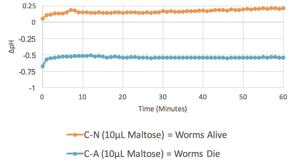 Figure 5. 10 µL Maltose ( n  = 3).  The graph plots average changes in pH over time with relation to two parameters: control minus no azide (C-N) and control minus azide (C-A). This indicates the results of change in pH when  C. elegans  are incubated with maltose, both with and without the presence of the mitochondrial inhibitor azide.