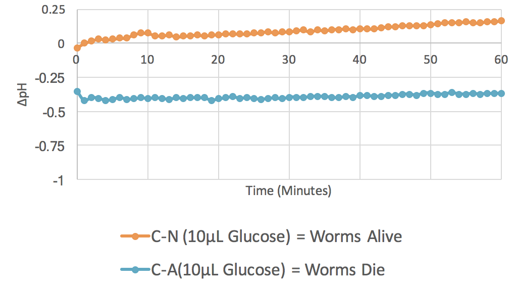 Figure 3. 10 µL Glucose ( n  = 3).  The graph plots average changes in pH over time with relation to two parameters: control minus no azide (C-N) and control minus azide (C-A). This indicates the results of change in pH when  C. elegans  are incubated with glucose, both with and without the presence of the mitochondrial inhibitor azide.