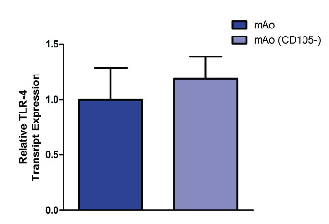 Figure 6. CD105 deficiency does not alter TLR-4 expression in mAo.  Gene expression of TLR-4 was measured in mAo progenitors treated with and without 50 nm siRNA. Data are expressed as mean ± SEM and are representative of three separate experiments.