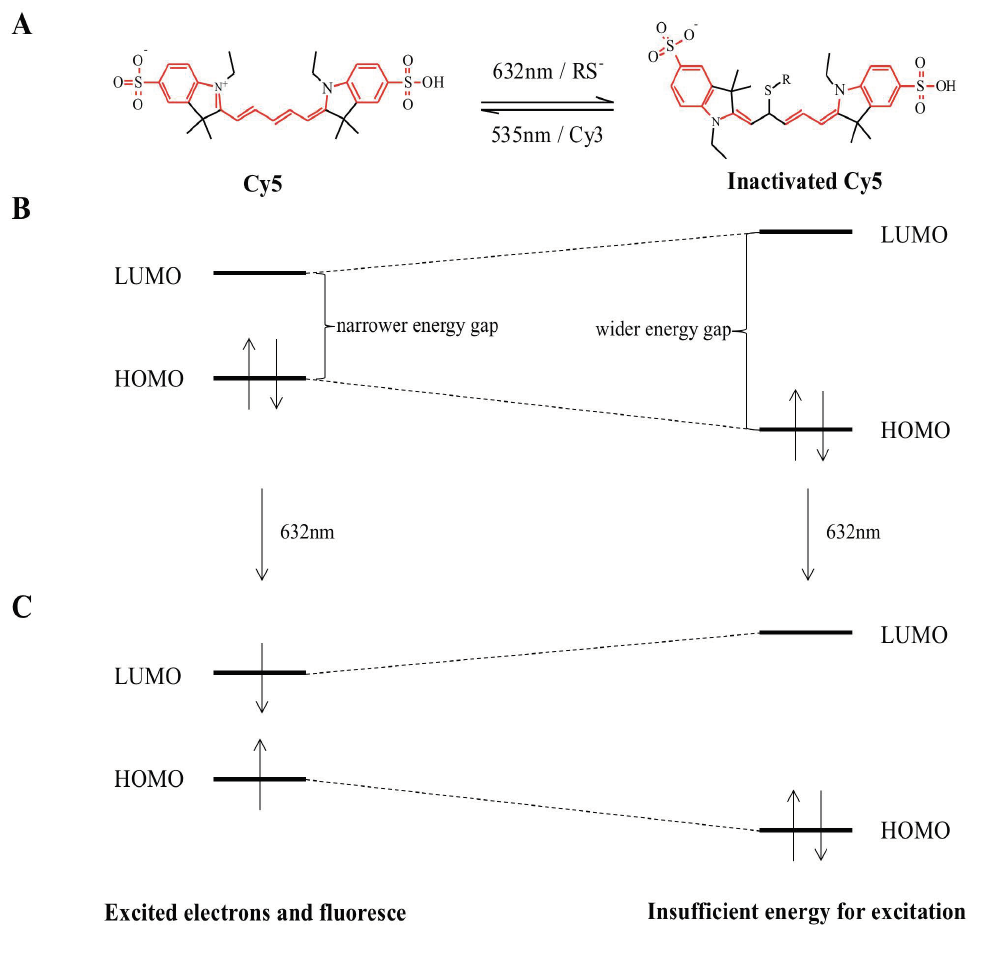 Figure 2. Mechanism of Photoswitching in Cy5 Dye.  A) Cy5 is fluorescent in its native state. Upon irradiation by red light (632 nm), Cy5 is excited and fluoresce C). In the excited state, thiolate ions in the buffer solution react with the fluorescent Cy5 and inactivate it. In the reaction, the π conjugation system (highlighted in red) is shortened from 20 bonds to two systems of 8 and 10 bonds. This shortening increases the HOMO-LUMO gap (B), and so the dye does not fluoresce under irradiation of red light (C). The inactivated state is reactivated by irradiation of green light (535 nm) in the presence of Cy3.