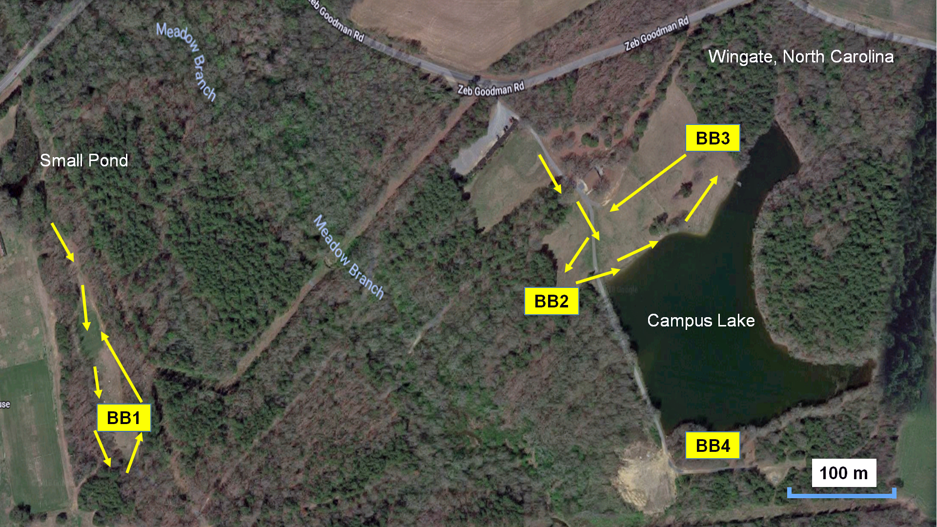 Figure 1. Google Earth map of study area on Wingate University Campus Lake.  This site is a mixture of hardwood forest, open mowed grassy fields, and trails. Areas of bat box deployment Bat boxes 1, 2, 3, and 4 (BB1, BB2, BB3, and BB4) shown in yellow boxes with arrows indicating survey location of call recording. BB1 and BB2 included temperature loggers and were suspended 20 feet on trees with BB1 in full sun and BB2 in partial sun. BB3 and BB4 were in full sun but were not utilized for temperature data. Google map data retrieved 11/2/2018, https://www.google.com/maps/@34.9865251,-80.4310875,639m/data=!3m1!1e3.
