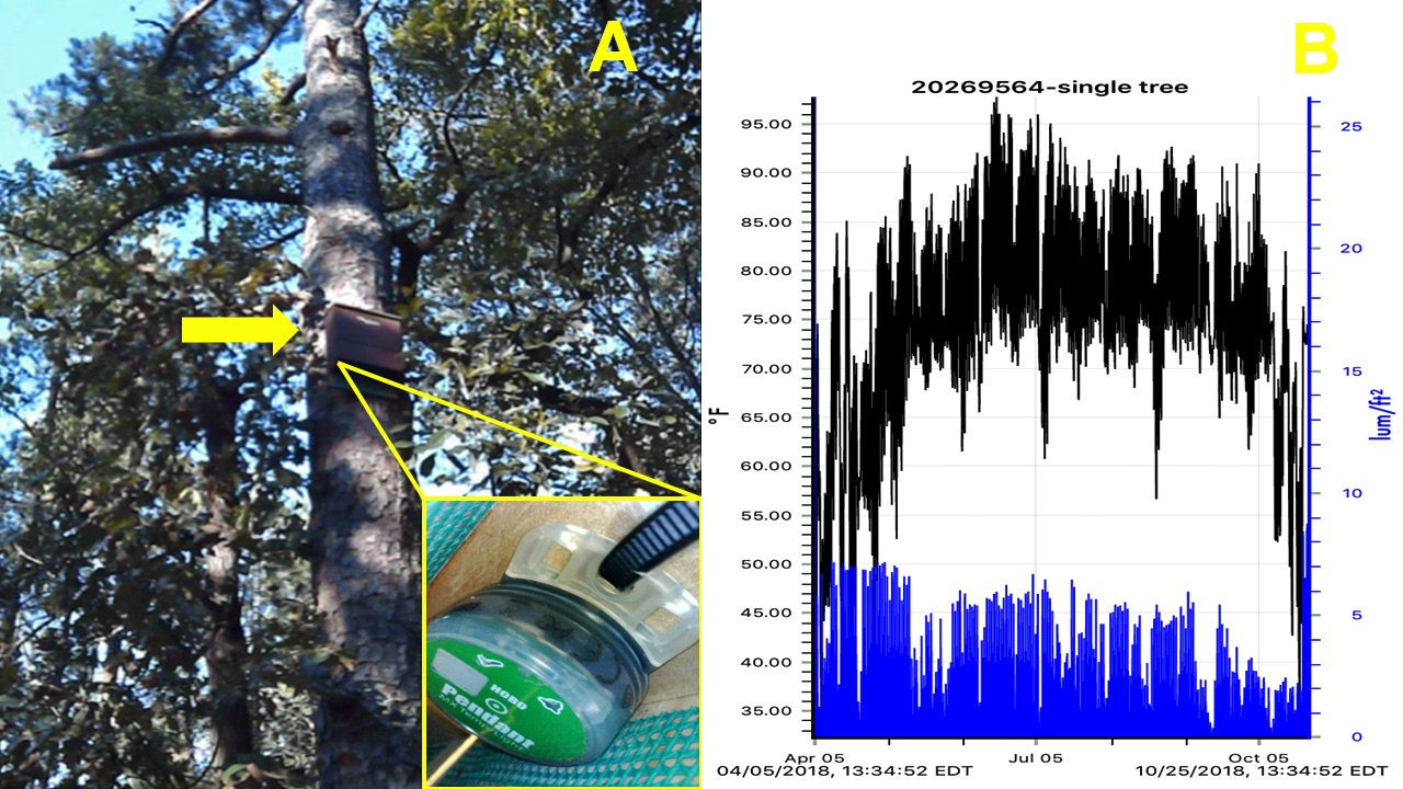 Figure 2. Bat Box 1 deployed (BB1) showing placement of HOBO® Pendant MX2202 temperature and luminosity logger (A), and preliminary downloaded data screen using WIFI (B).  Data loggers were attached internally with zip ties to record ambient temperature and light (luminosity) every hour.