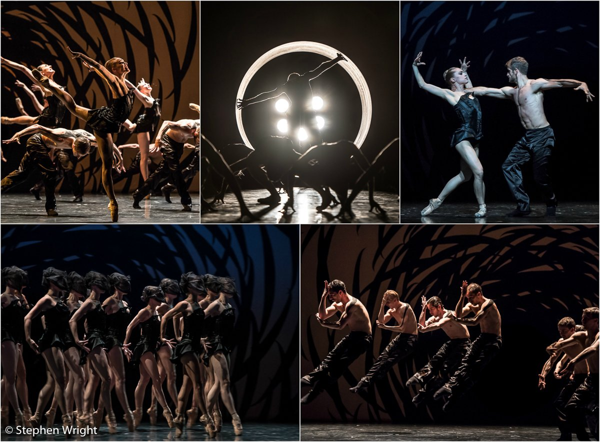 Scottish Ballet  performing  Crystal Pite 's work,  Emergence  at  Sadler's Wells .