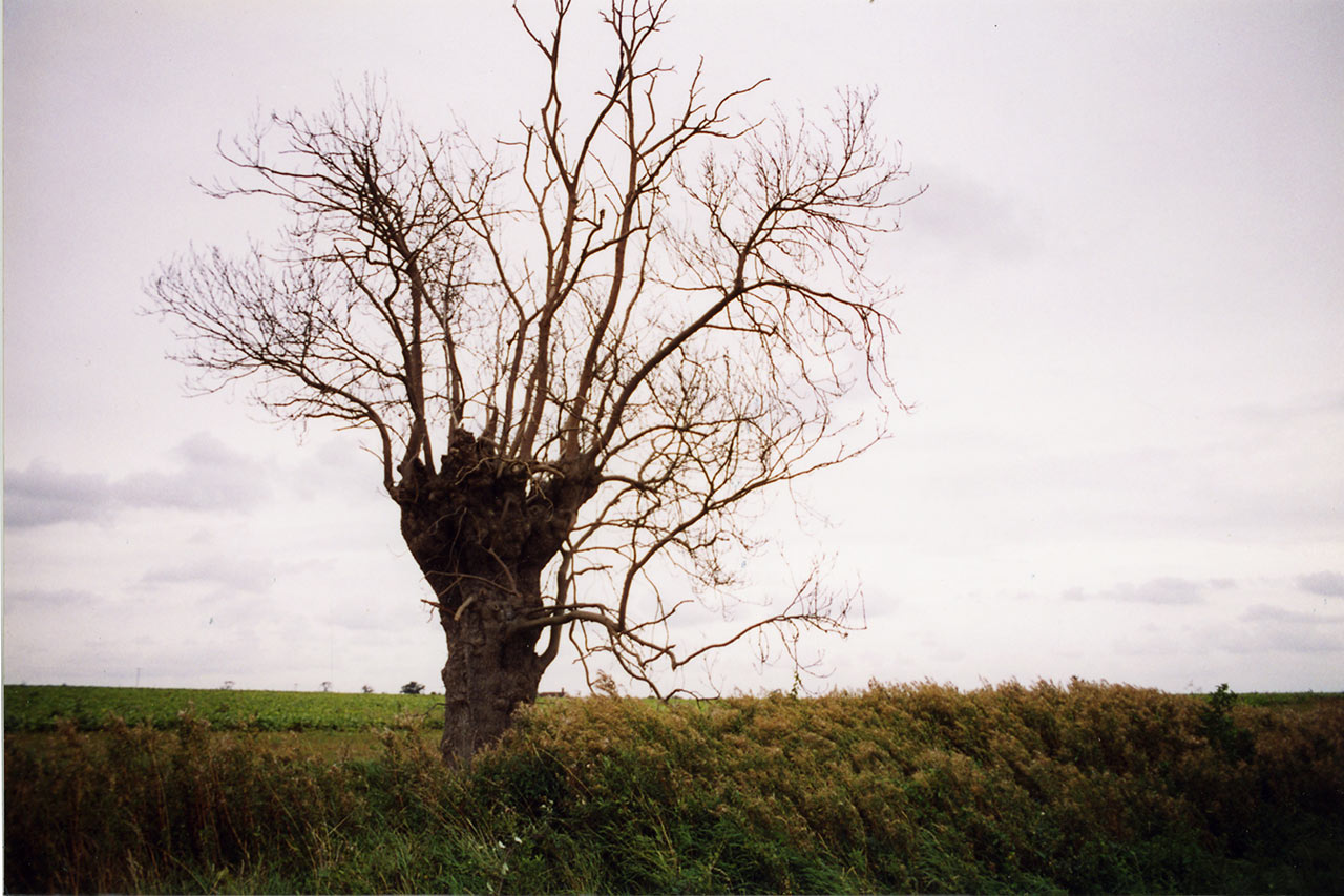 Trees-10.jpg