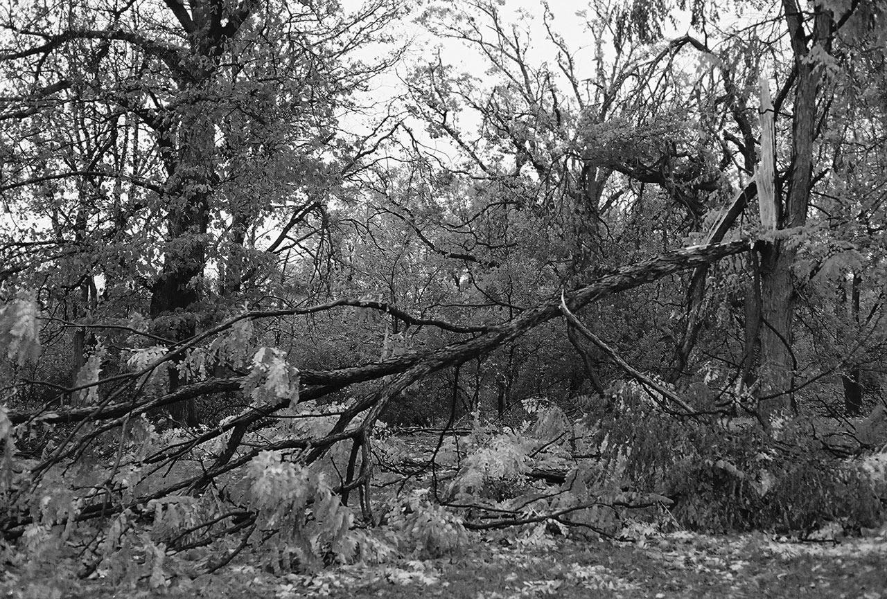 City-of-Fallen-Branches-2.jpg