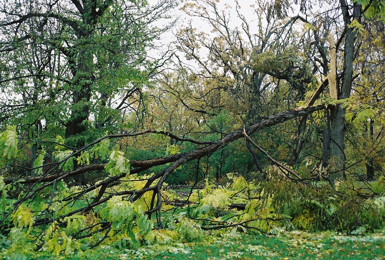 City-of-Fallen-Branches-3.jpg