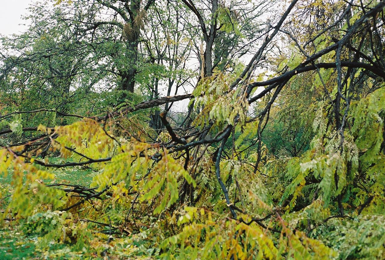 City-of-Fallen-Branches-4.jpg