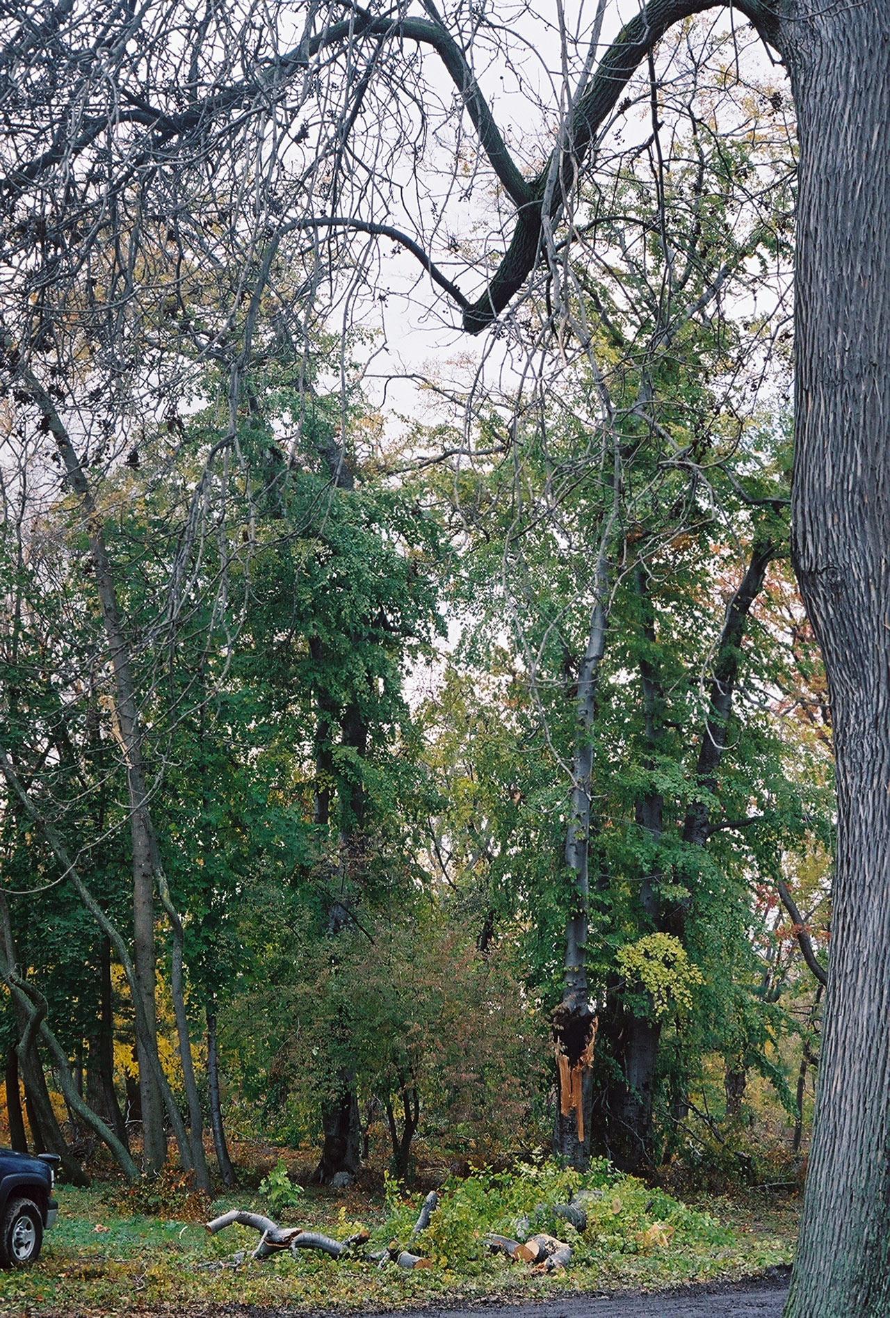 City-of-Fallen-Branches-5.jpg