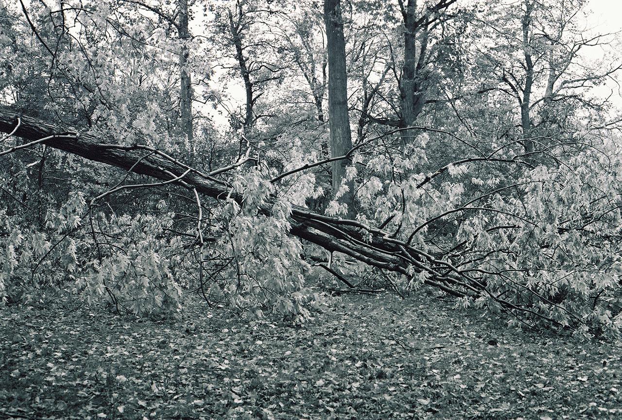 City-of-Fallen-Branches-7.jpg