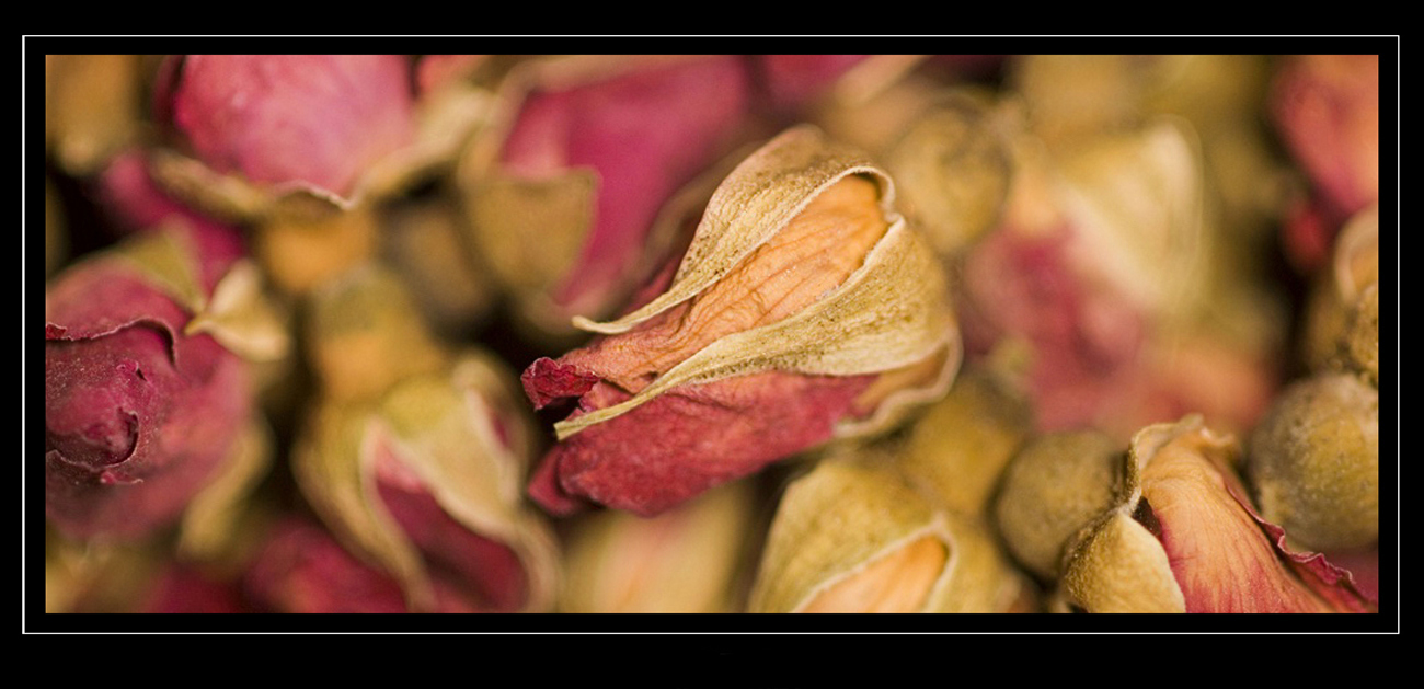 rose red.1..jpg