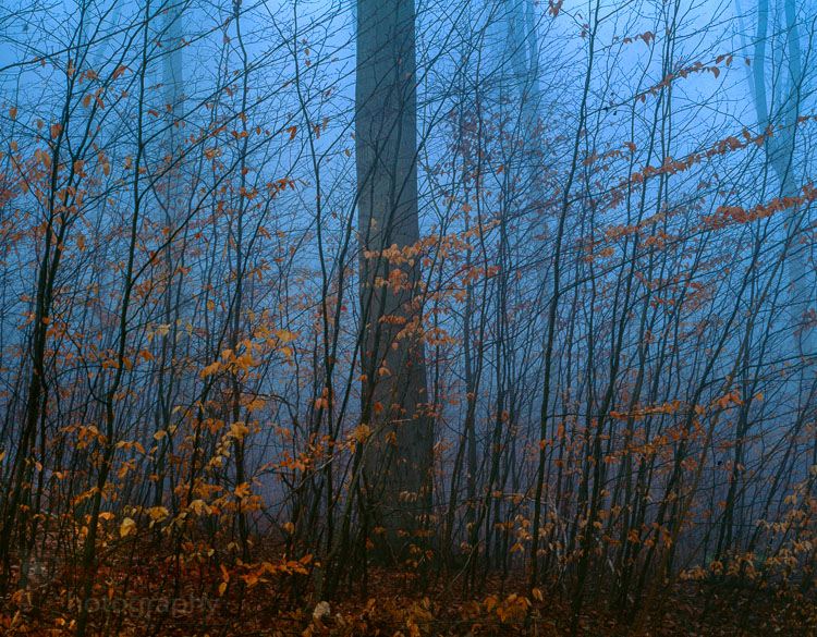 "Autumn 2004. Pentax 6x7, 90mm Lens. Fuji Velvia. Image made as part of my ""On the way to work"" project. Göttingen."