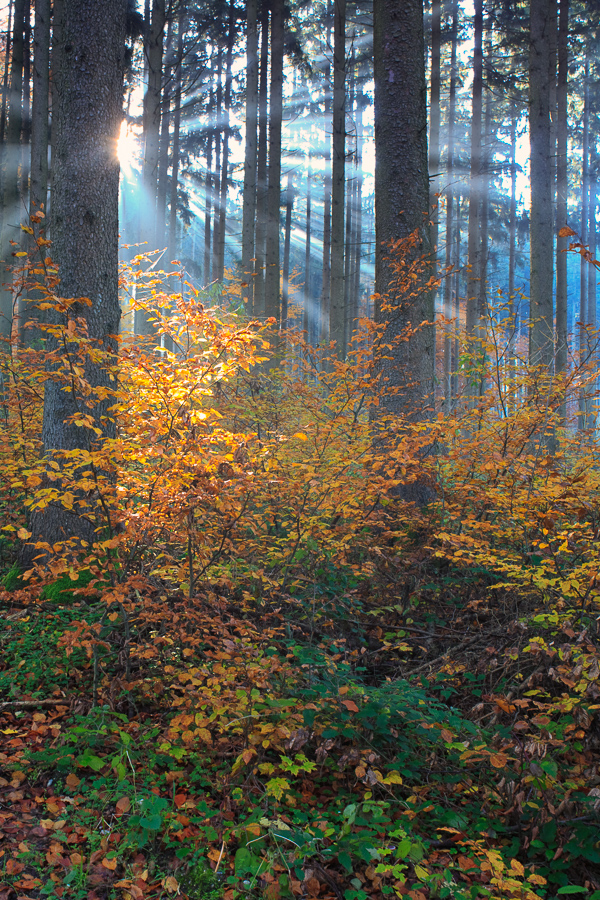 "Autumn 2007. One of the best thing with EOS 5D (and other canon cameras) was that it allowed to adapt legacy lenses. I bought few interesting lenses. One of my favorite has been 35mm Olympus Zuiko SHIFT. This should would not have been possible with the two-way shift this unique lens allows. I still have that lens and use it once in a while. Image made as part of my ""On the way to work"" project."