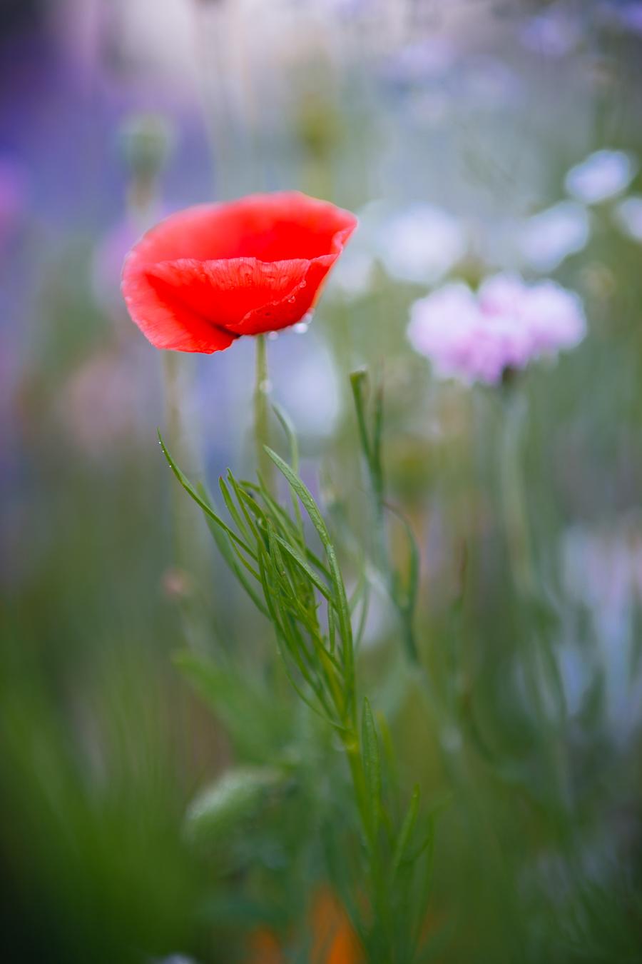 Flowers_150720_119.jpg