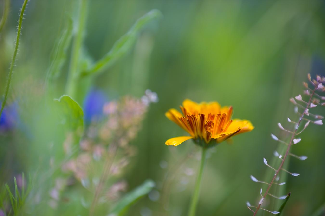 Flowers_150720_081.jpg