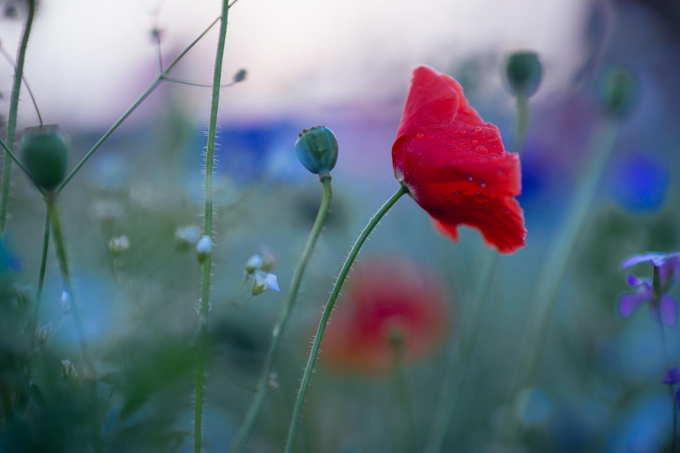 Flowers_150720_052.jpg