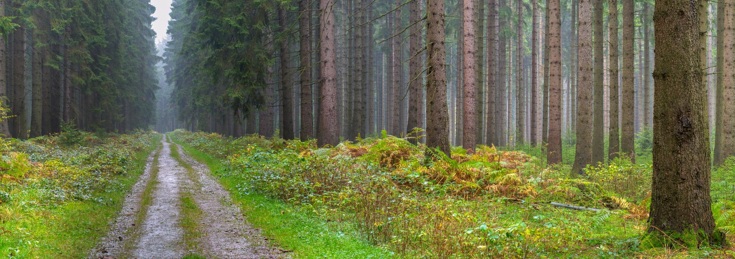 Woods are Lovely - Nikon 80D in 2006