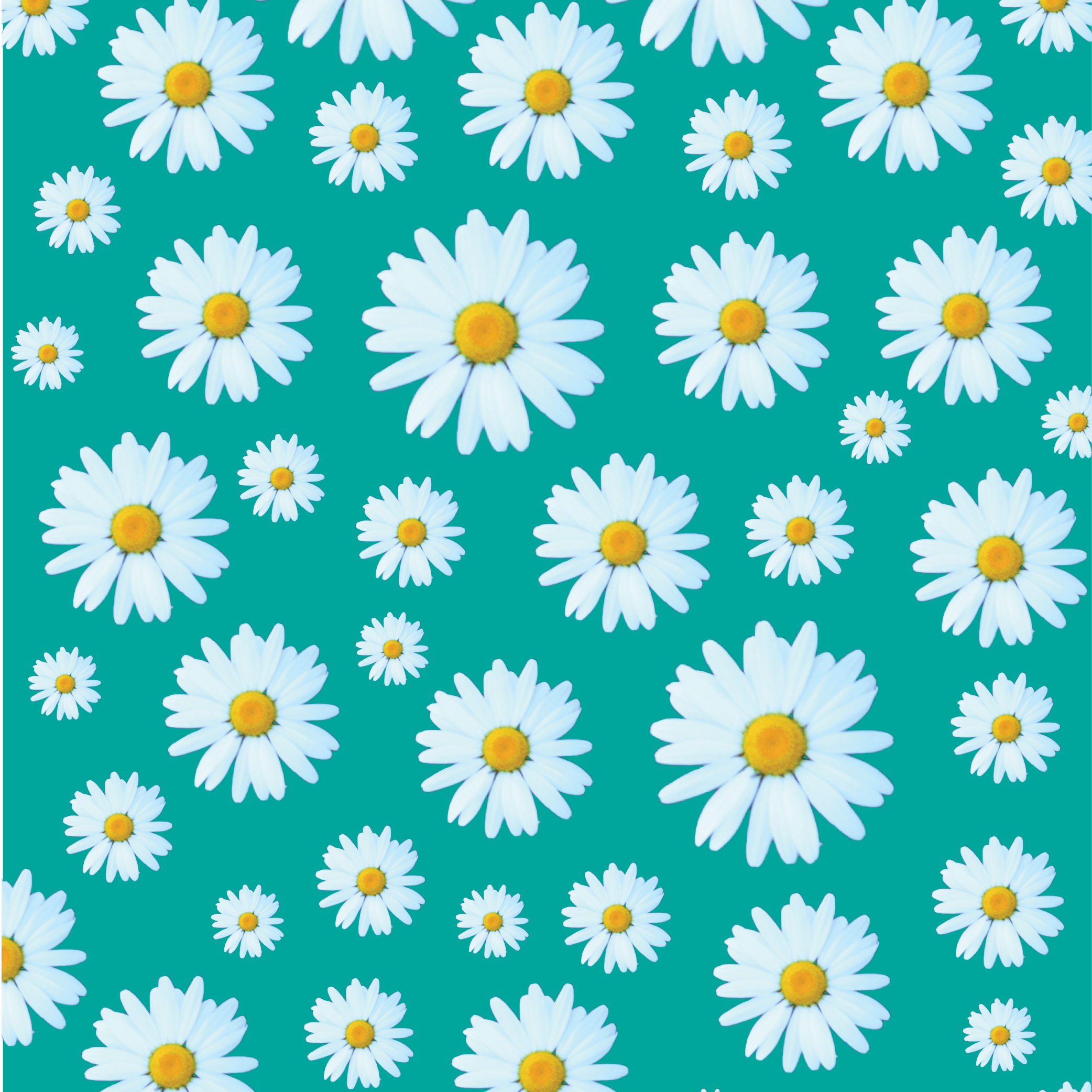 Dozens of Daisies - Click  HERE  to shop this print :)