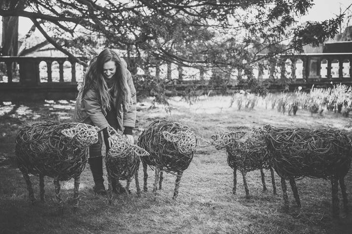 willow sheeps.jpg