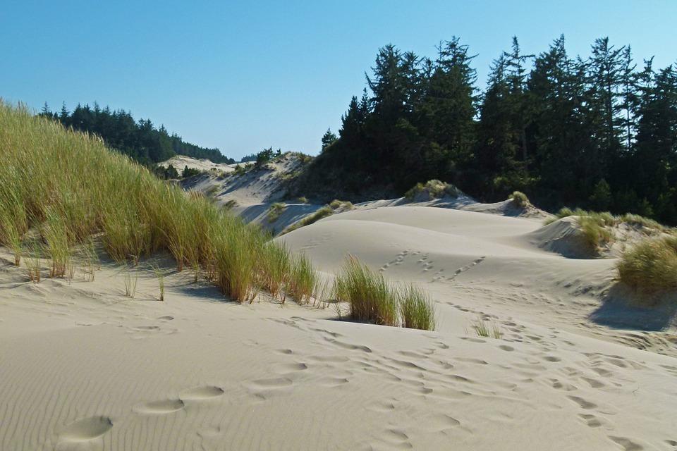 Someone else's photo of the Oregon Sand Dunes.