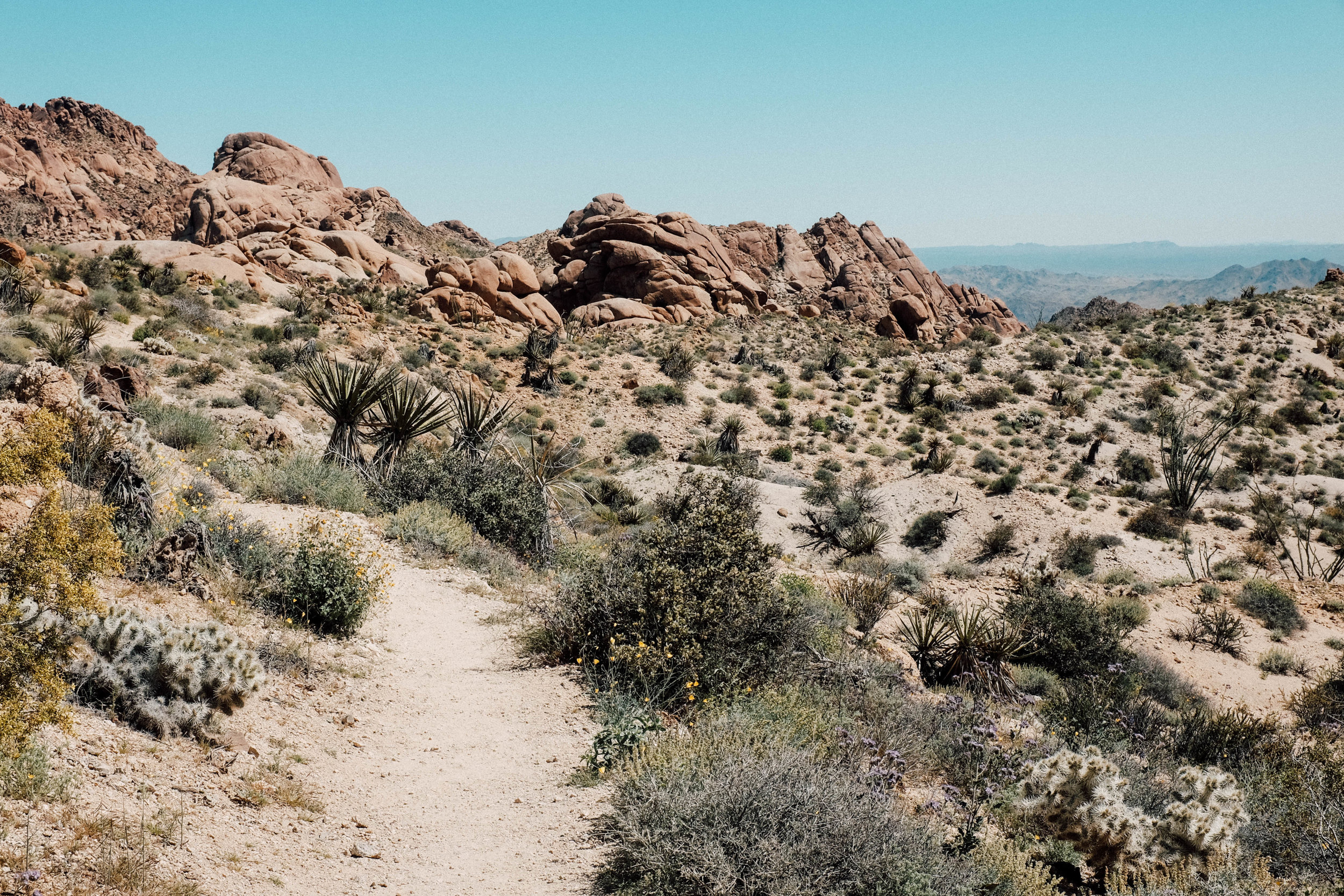 We did the Lost Palms Oasis Trail to start off Joshua Tree.