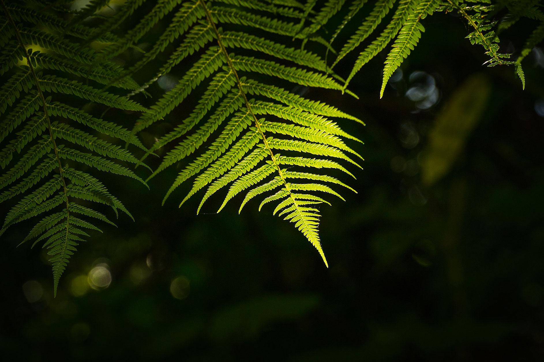 MBP_Nature_24.jpg