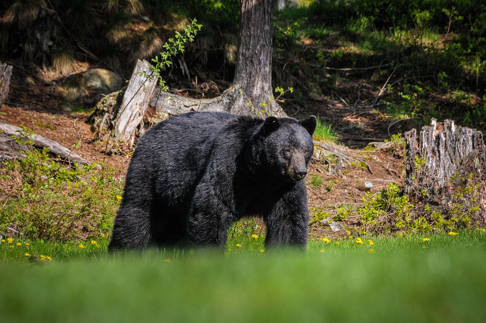 MBP_Wildlife_8.jpg