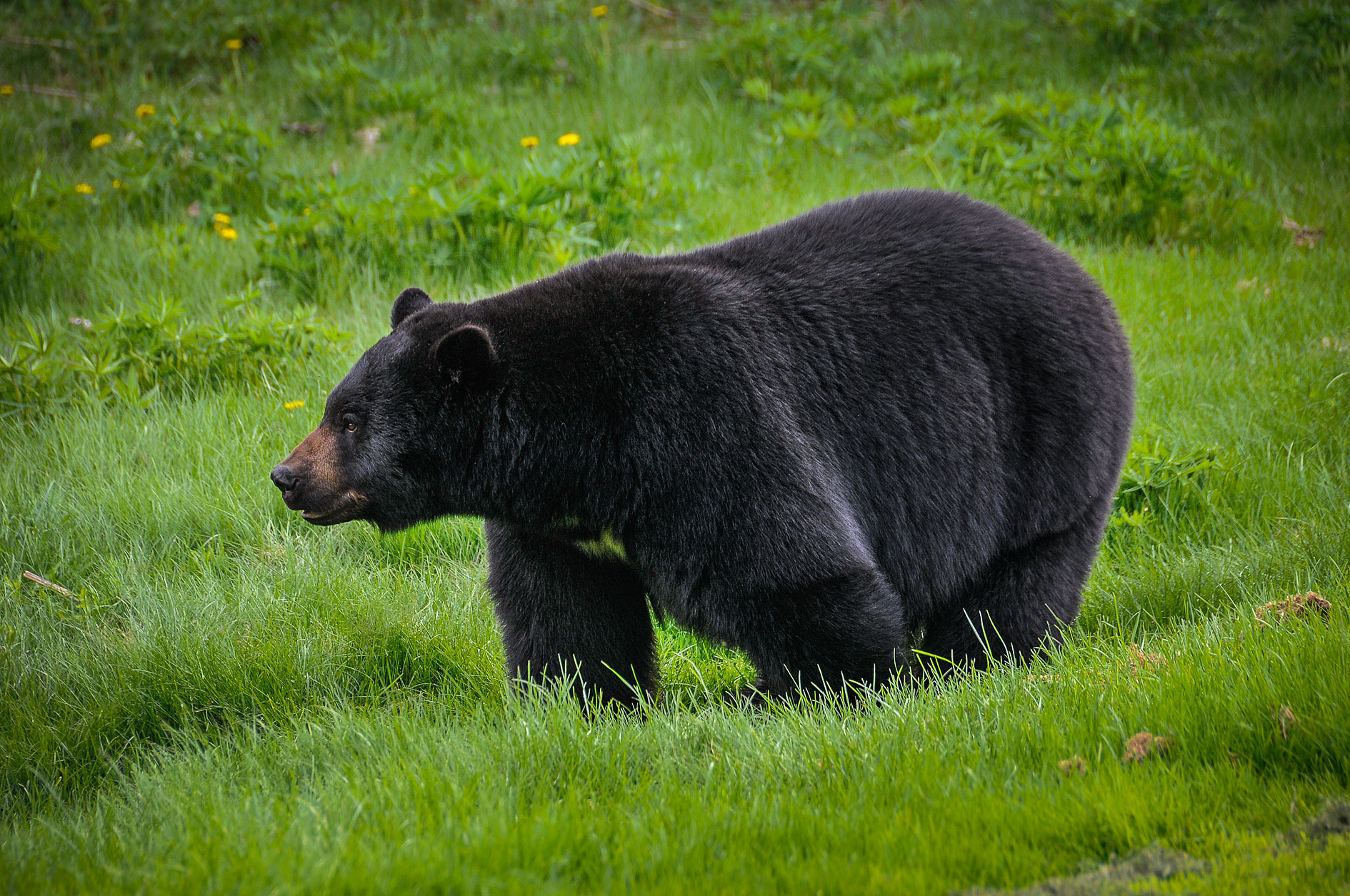 MBP_Wildlife_9.jpg