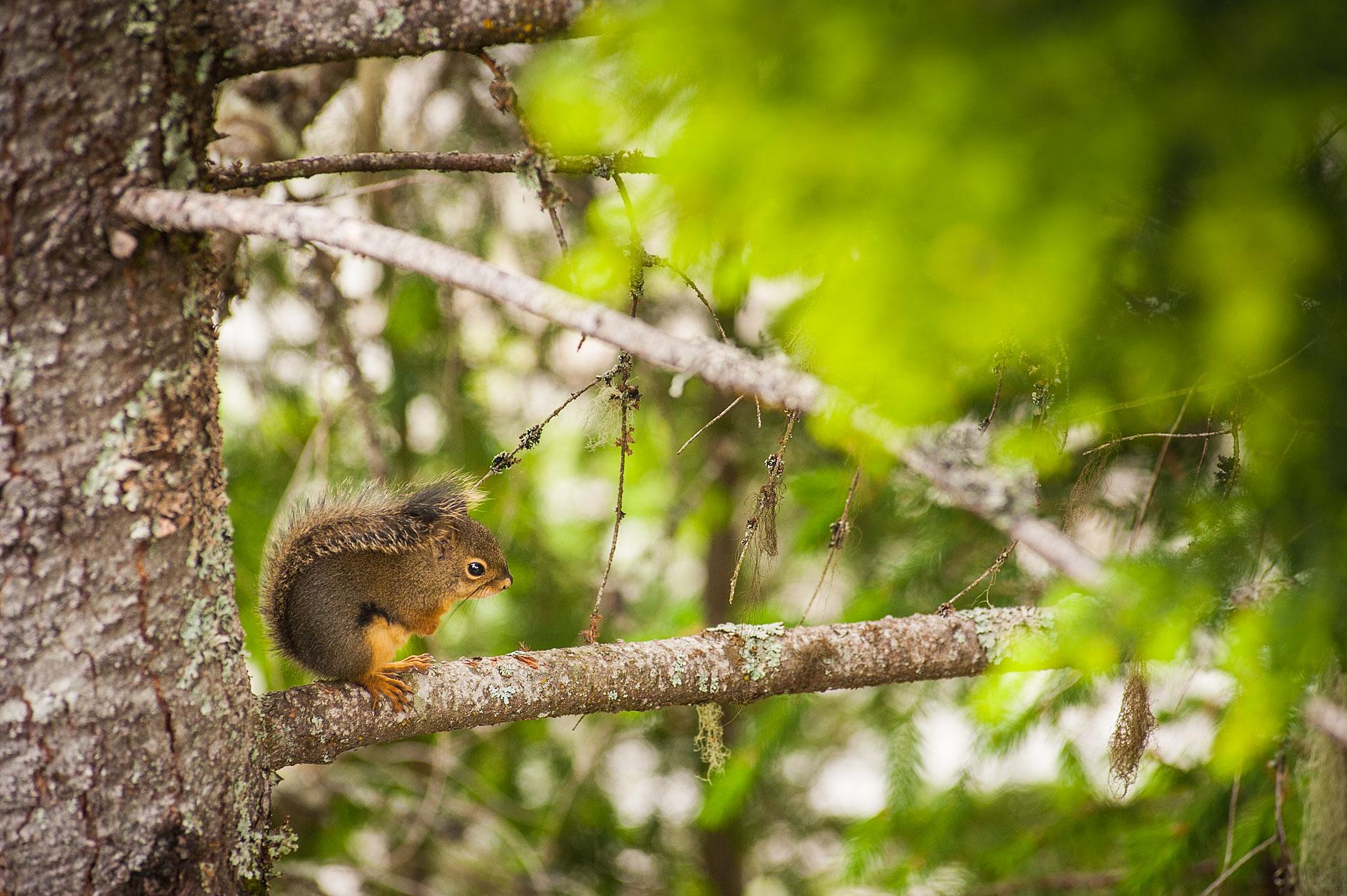 MBP_Wildlife_16.jpg
