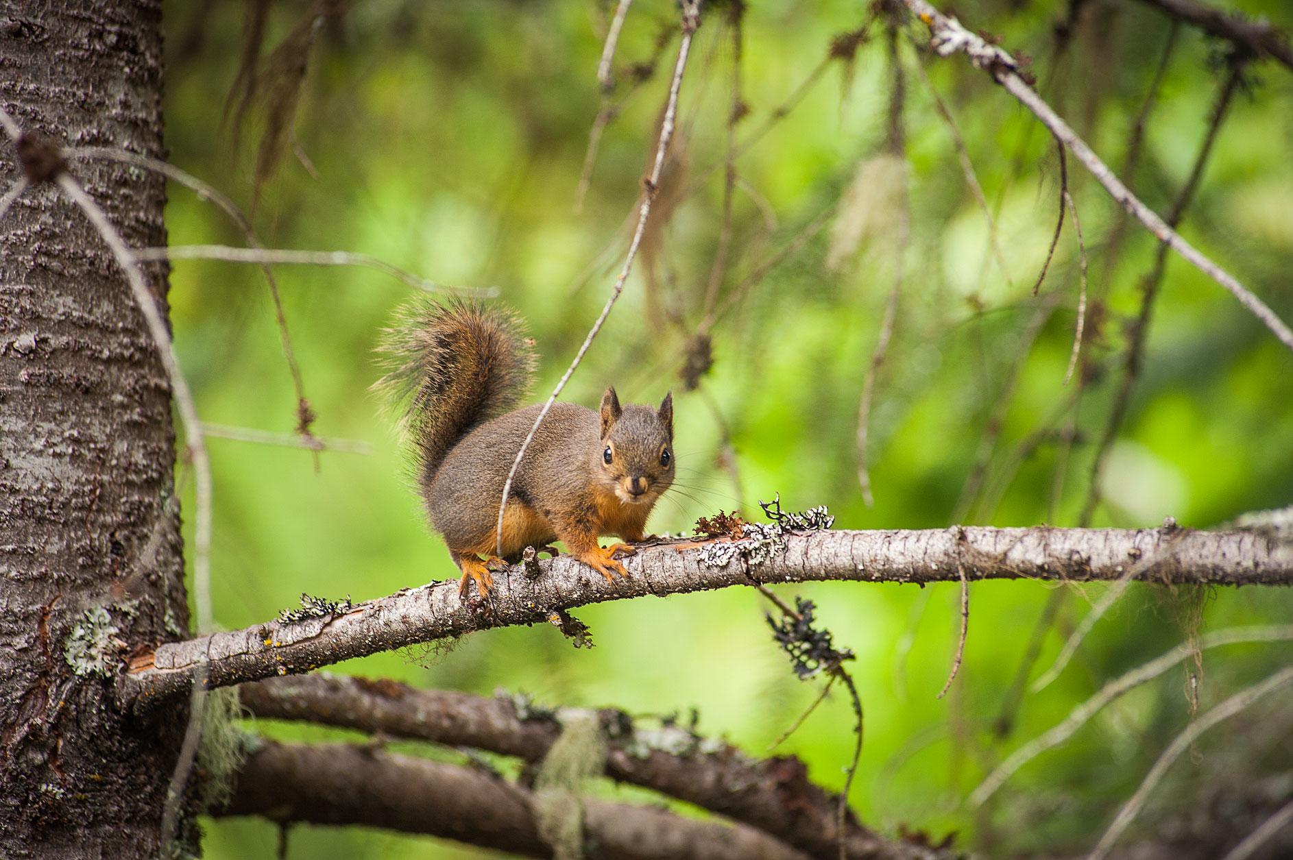 MBP_Wildlife_18.jpg